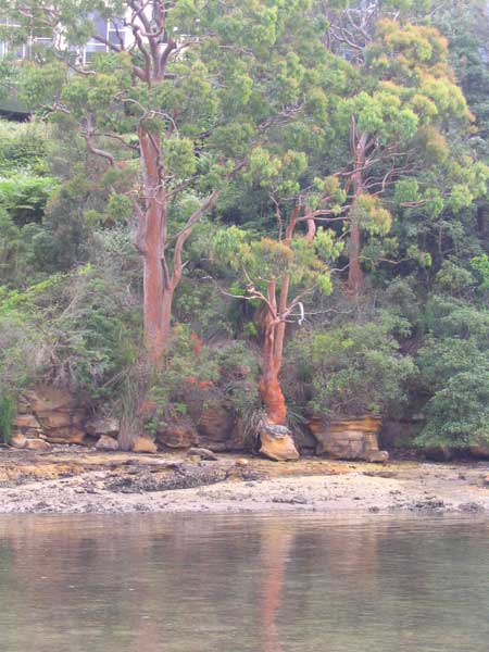 Griffins and the Australian bushland |  4